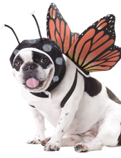 Butterfly Pet Costume California Costume